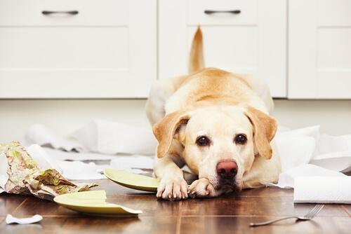 ¿Qué provoca la desobediencia en nuestros perros?