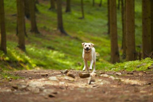 Rescatan a 31 perros que vivían en un bosque con un hombre