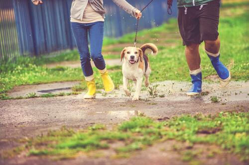 ¿Cómo preparar a un perro para la lluvia?