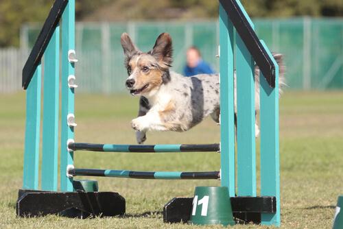 perro practicando deporte