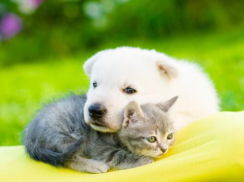 perro y gato cachorro