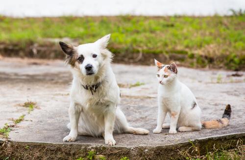 Ley de tenencia de mascotas