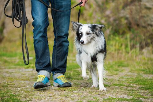 perro y hombre caminando
