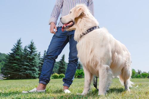 Un perro te ayuda a cuidar el corazón