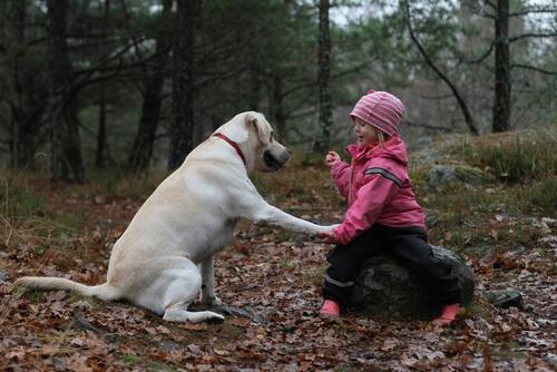 Un perro no es un juguete