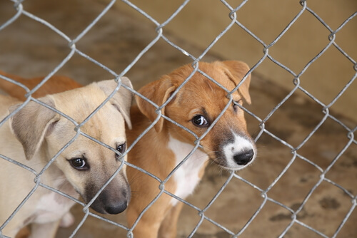La escalofriante realidad de los perros en Tailandia
