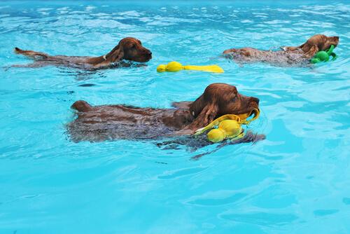 Conoce razones por las que tu perro debe nadar