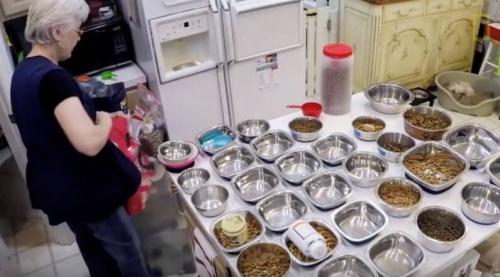 Se crea un hogar de retiro para animales ancianos