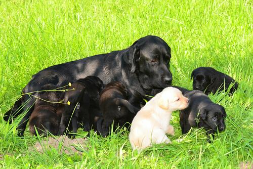 filhotes e cachorro