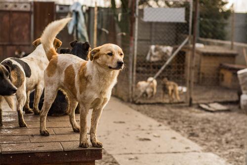 refugio de perros