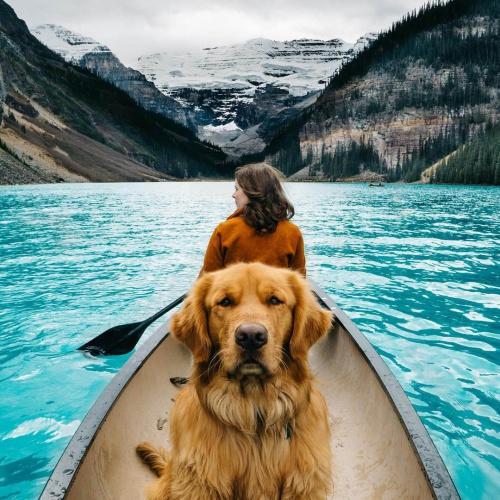 Aspen, un perro de 130 mil seguidores en Instagram