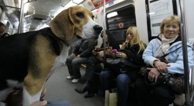 ¡Buenas noticias! Los perros podrán entrar en toda la red de Metro de Madrid