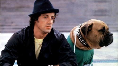 Una triste historia de Sylvester Stallone y su perro Butkus