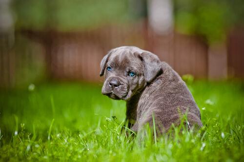 cachorro huerfano