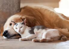 cambio climatico en perros y gatos