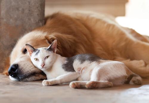 El cambio climático afecta a los perros y los gatos
