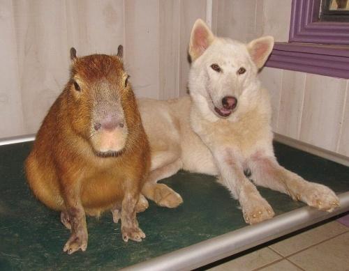 Cachorros huérfanos y una increíble madre adoptiva