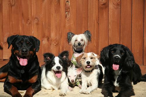 Cómo evitar las manías del perro