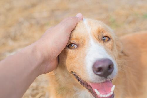 como se siente tu perro