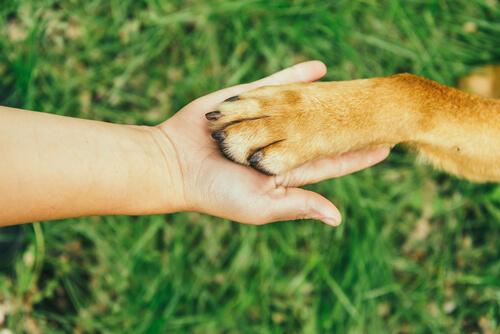 Cortar las uñas de tu perro
