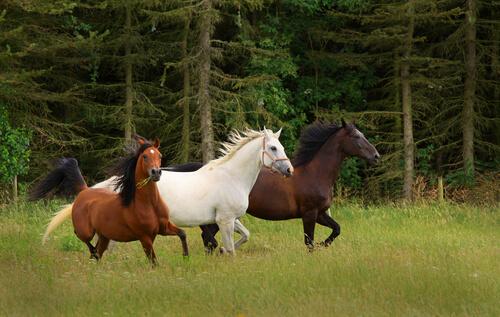 cria de caballos en libertad