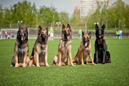 ¿Quieres ser un buen cuidador de perros? Aquí te explicamos cómo serlo