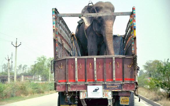 Dos elefantes rescatados
