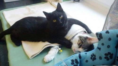 el gato veterinario 2