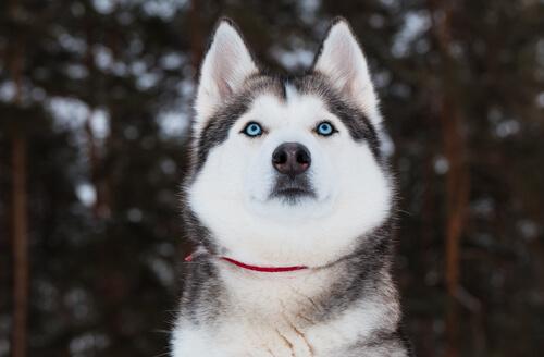 El perro reconoce nuestras emociones mirándonos a los ojos
