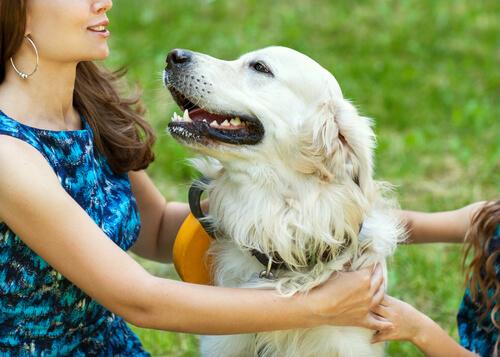 el perro y la hormona del amor