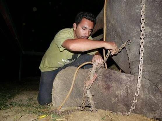 Raju, elefante maltratado