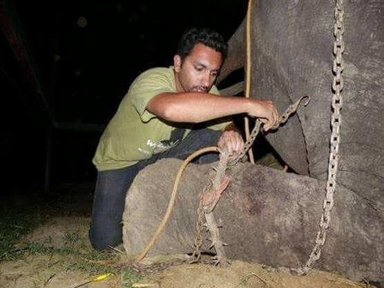 elefante llorando1