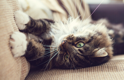 Consejos para que tu gato no dañe tus muebles