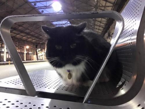 Gato que trabaja en la estación de tren