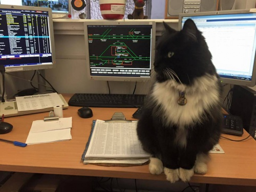 Fuente: Facebook de Felix the Huddersfield Station Cat