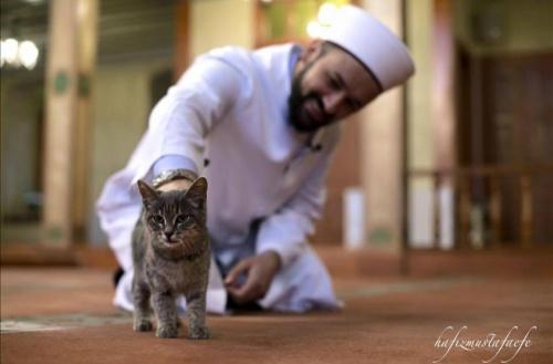 Un imán de Estambul abre una mezquita para los gatos callejeros