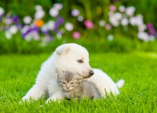 los gatos y los perros sienten