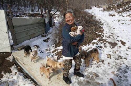 mujer coreana rescatando perros