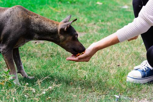 Dando comida na mão