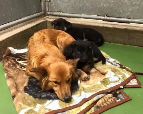 Una perrita se escapa de jaula para consolar a unos cachorros