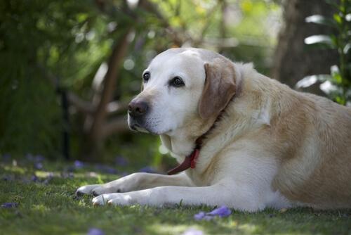 Denunciado por arrastrar a un perro atado al guardabarros