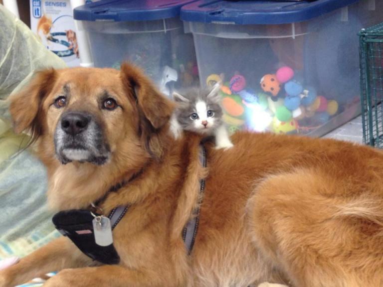Perro que sobrevivió al Katrina ayuda a los gatos desprotegidos