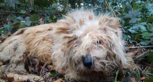 Encuentran en Inglaterra a un perro con todos los huesos fracturados