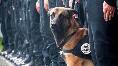 Diesel, el perro héroe de los atentados de París, murió por disparos de un policía