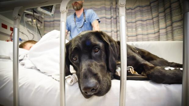 perro labrador con su dueño autista en el hospital 2