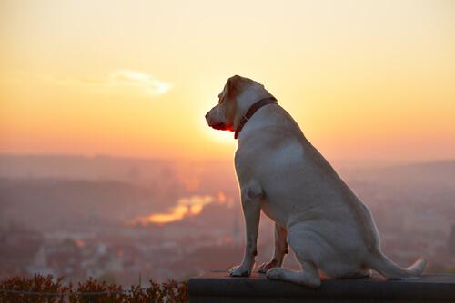 Los perros vienen de las estrellas