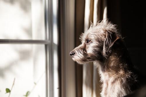 Situaciones que tu perro percibe antes de que ocurran
