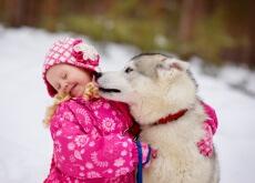 perro quiere lamer la cara de una niña