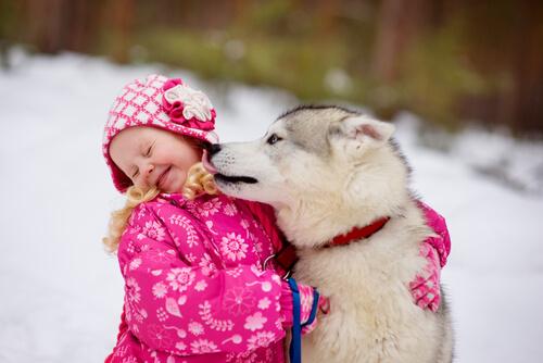 ¿Por qué los perros siempre quieren lamer la cara?