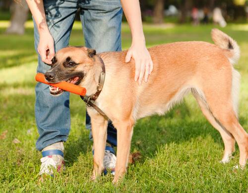 perro recibe recompensas de su dueño